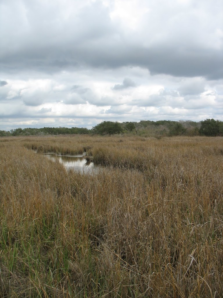 tidal marsh and prairieland