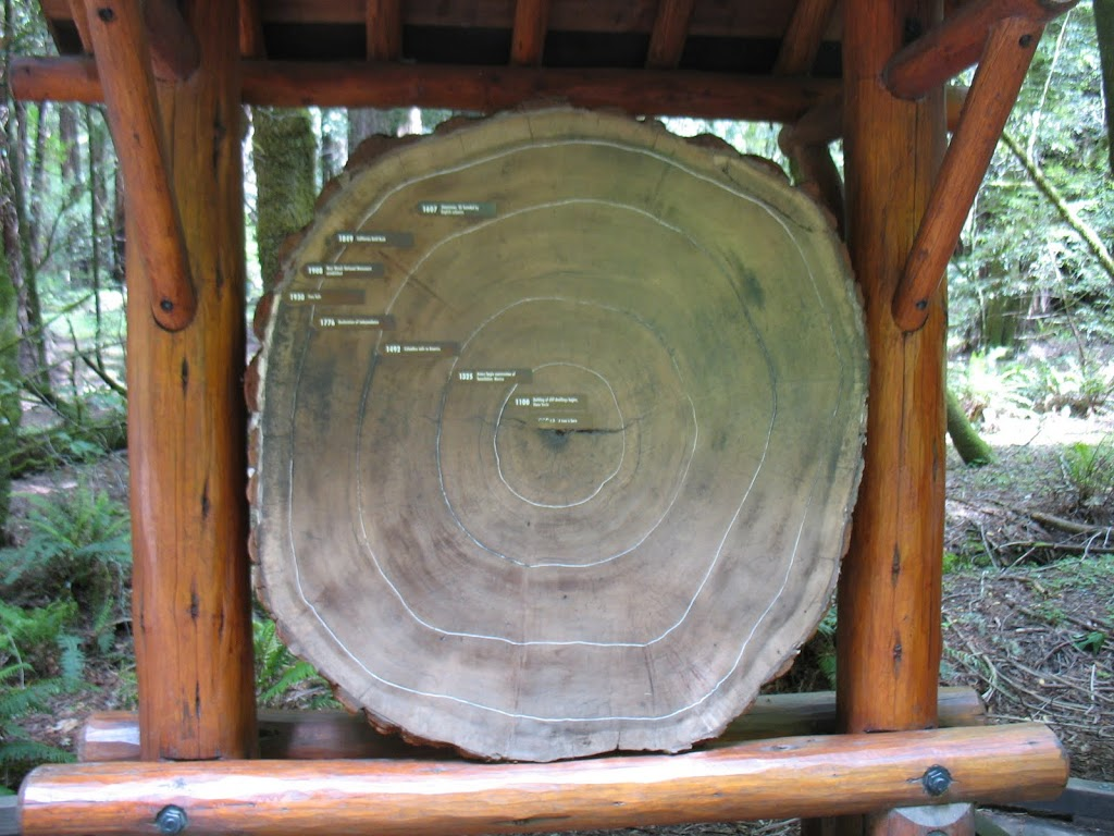 redwood-rings-2