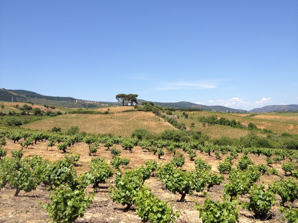 tasting wine in el Bierzo